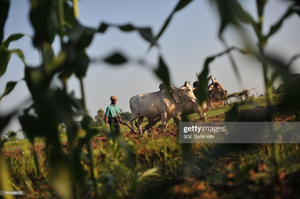 A Myanmar labourer works in a field on the outskirts of Naypyidaw on October 20, 2012. The World Bank is working with one-time pariah Myanmar, its president said on October 13, and is helping the country to get its debts cancelled. AFP PHOTO/ Soe Than WIN