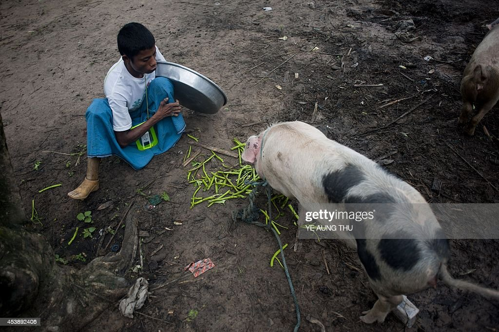 MyanmarhealthleprosyFEATURE by Kelly Macnamara A patient feeds a pig at a leprosy camp on the outskirts of Yangon on June 13 2014 Myanmar reached...