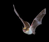 Taken in the Madera Canyon area of southern Arizona, the bats come looking for water