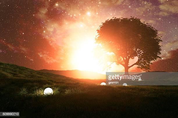 神秘的な光パスの草地