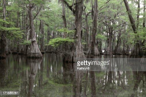Mysterious Louisiana Swamp