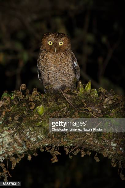 Mysterious owl at night