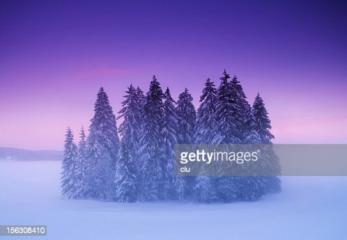mysterious forest in winter - photo #26
