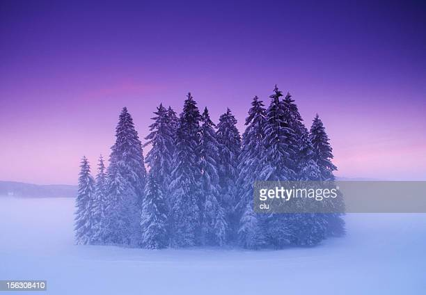 Mysterious small winter forest under dramatic sunset sky
