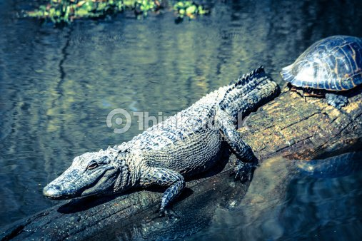 Mystety of swamps 10. : Stock Photo