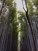 This mystic bamboo forest is located in Kyoto, Japan.