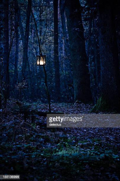 Forêt mystique loin