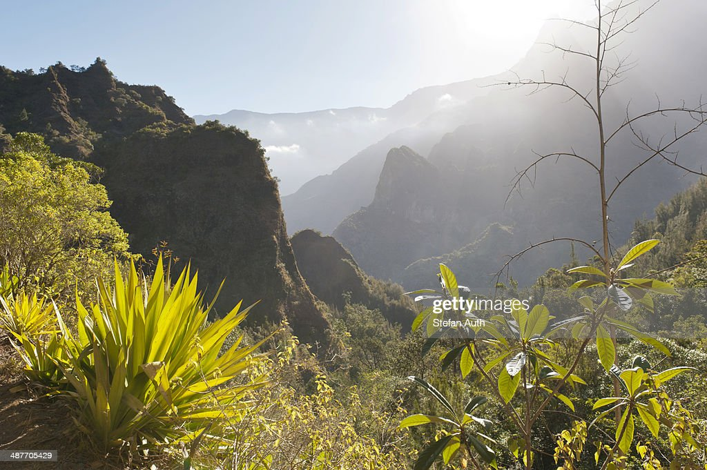 Mystical misty mountain landscape, with agave in the foreground, Cilaos, Cirque de Cilaos, French Overseas Territory, La Reunion
