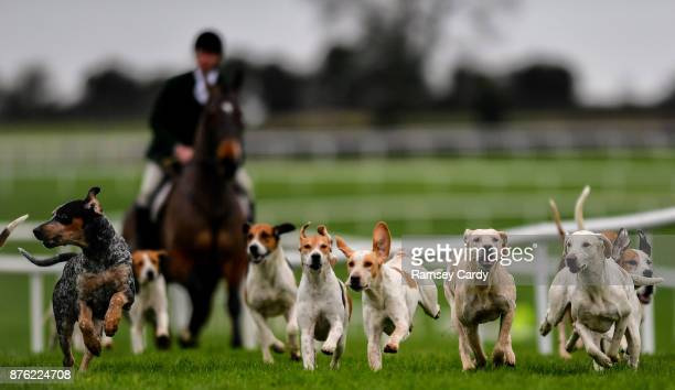 Naas Ireland 19 November 2017 Hunstmen and hounds run along the home straight at Punchestown Racecourse in Naas Co Kildare