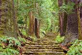 Kumano Kodo at Daimon-zaka, a historic trail in Nachi, Wakayama, Japan.