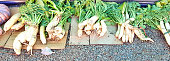 Organic cultivated Naga radish of Nagaland of north-east India.