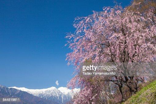 Nagano Prefecture, Japan : ストックフォト