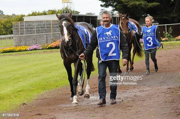 Nahanni parades before Patrick of Coonawarra Maiden Plate at Hamilton Racecourse on October 23 2016 in Hamilton Australia