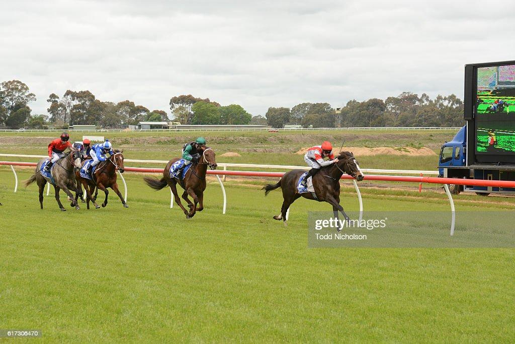 Nahanni ridden by John Allen wins Patrick of Coonawarra Maiden Plate at Hamilton Racecourse on October 23, 2016 in Hamilton, Australia.