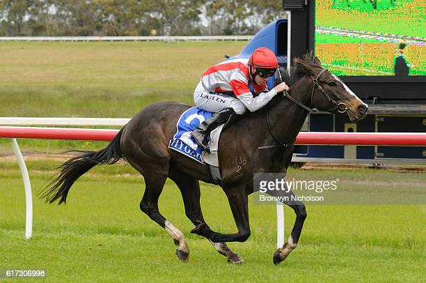 Nahanni ridden by John Allen wins Patrick of Coonawarra Maiden Plate at Hamilton Racecourse on October 23 2016 in Hamilton Australia