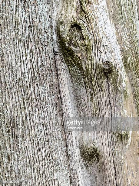 Nahaufnahme der Rinde eines alten Baumstammes Bild für Hintergrund