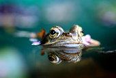 Das Leben im und um den Teich in Deutschland: Frosch und Schlange in ihrem natürlichen Lebensraum