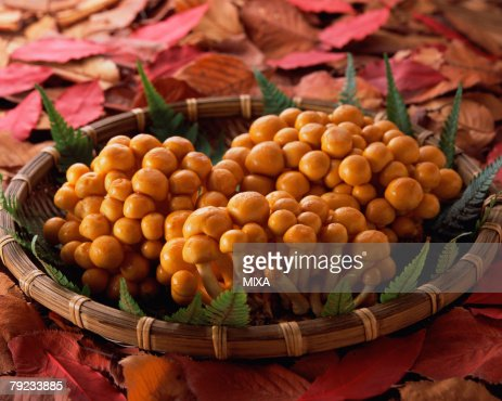 Nameko Mushroom : Stock Photo