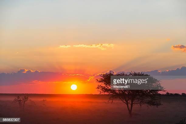 Namibia, Etosha National Park, sunset