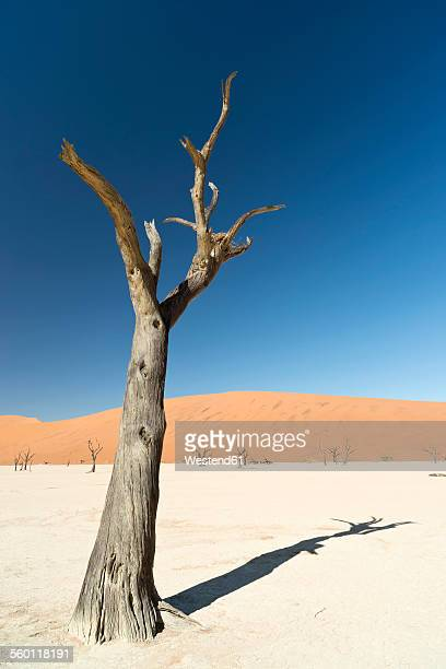 Namibia, Namib Desert, Namib Naukluft Park, Sossusvlei, Deadvlei