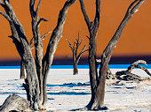 Namibia, Namib Naukluft, Dead Vlei, dead camel thorns in front of desert dune