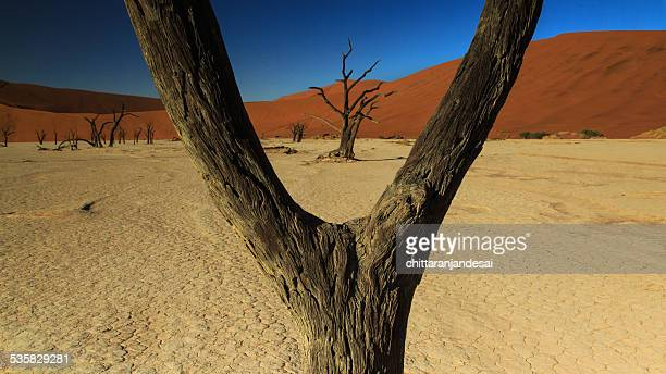Namibia, Naukluft National Park, View of Dead Vlei