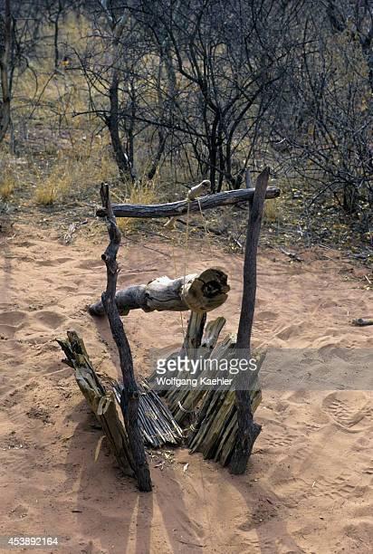 Namibia Okonjima Educational Bushman Walk Animal Trap