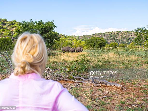 Namibia, Outjo, tourist looking at group of white rhinoceros in Ongava Wild Reservat