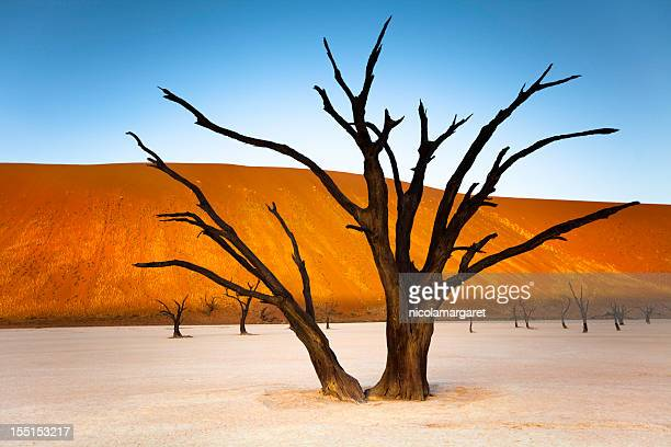 Namibia:  Sunset at Dead Vlei