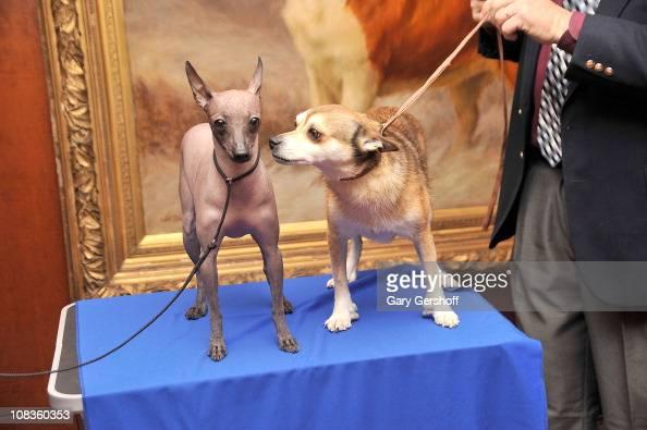 American Kennel Club A...