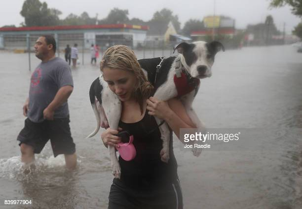 Naomi Coto carries Simba on her shoulders as they evacuate their home after the area was inundated with flooding from Hurricane Harvey on August 27...