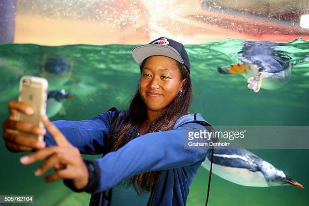 Naomi Osaka of Japan takes a selfie with penguins as she visits Melbourne Aquarium during day three of the 2016 Australian Open at Melbourne Park on...