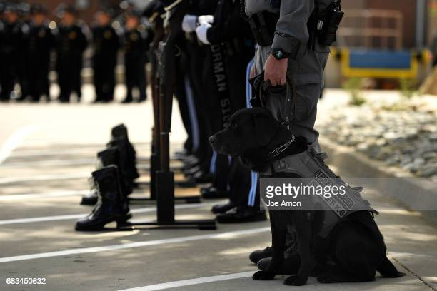Narcotics dog 'Buddy' sits with his handler Deputy Truman Aumiller as the Denver Sheriff's Department hold a memorial ceremony for DSD officers who...