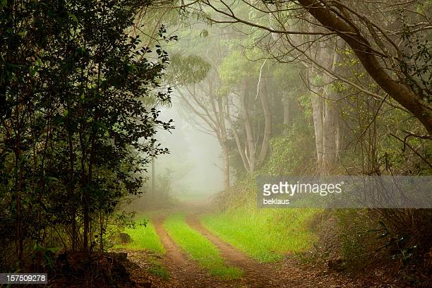 Narrow foggy country dirt road
