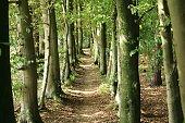 Sehr schmaler Weg zwischen den Bäumen