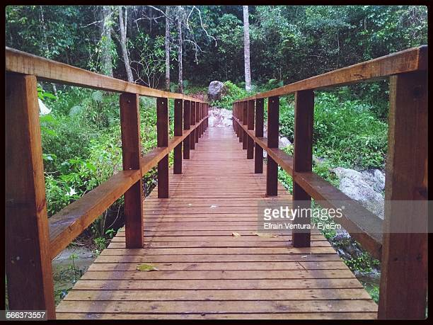 Narrow Wooden Footbridge Along Plants