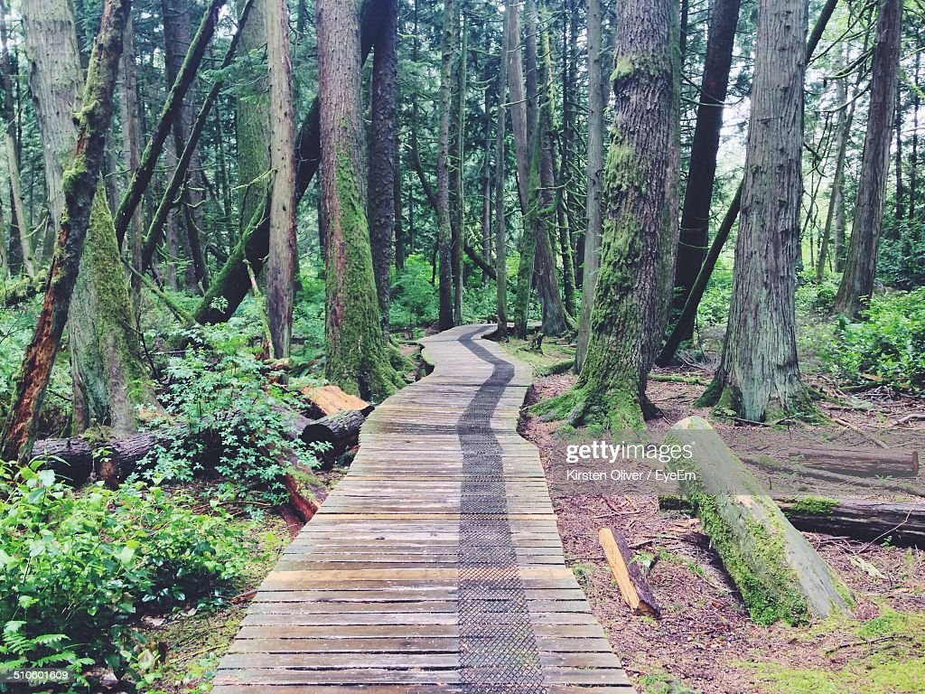 Narrow wooden pathway along trees in forest