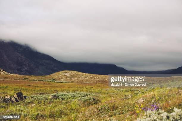 Narsaq tundra