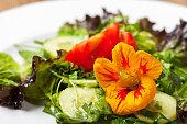 nasturtium flower on mixed salad