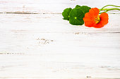 Flower of nasturtium isolated on white wood background useful as mothers day card or greeting card