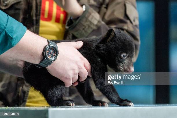 Nat Geo WILD host David Mizejewski discusses 'Pet Talk' with moderator Matt Forte and a a baby black bear during the build series at Build Studio on...