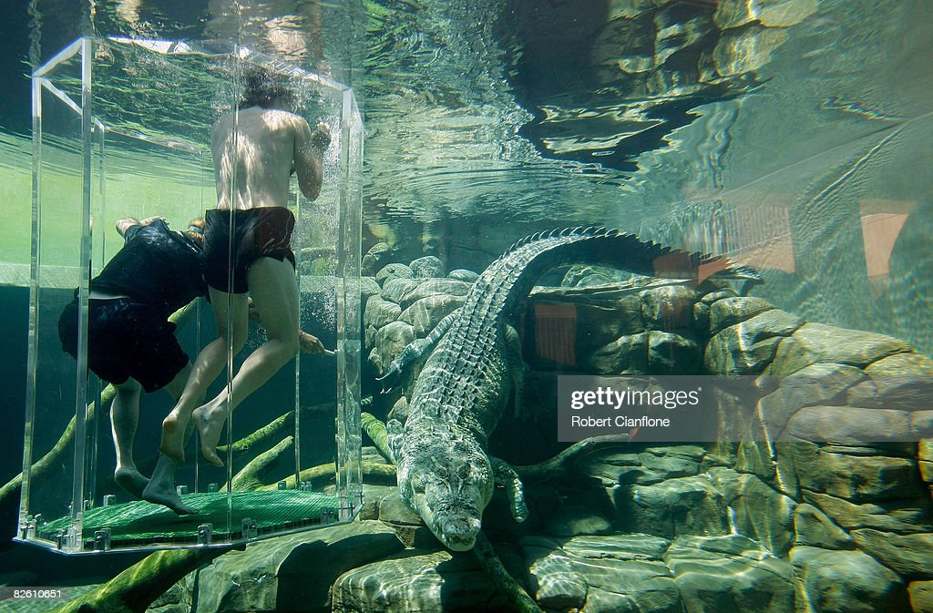 Nathan Bracken of Australia and fielding coach Mike Young stand in the 'Cage of Death' in the crocodile enclosure at Crocosaurus Cove on August 31, 2008 in Darwin, Australia.
