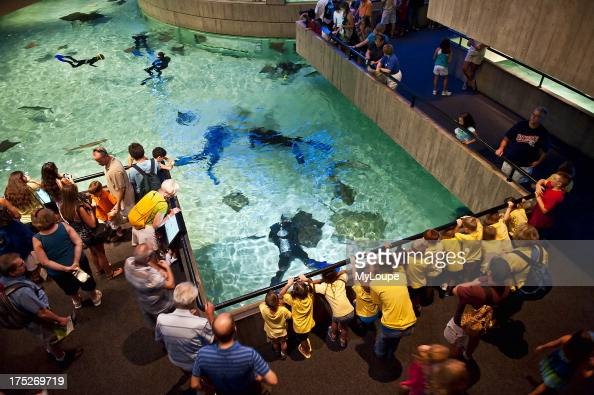 National Aquarium Inner Harbor Baltimore Maryland Usa Pictures Getty Images
