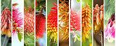 Bright and beautiful Australian native plants blossom