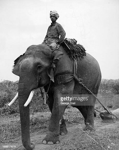 Native Burmese using their beast of burden an elephant in getting their lumber down to the river banks for transporting to a nearby village in Chabua...