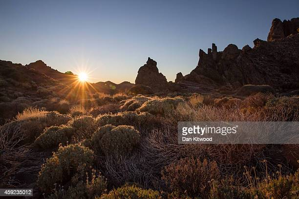 Native plants grow in the Teide National Park beneath the foot of the El Teide Volcano on November 10 2014 in La Gomera Canary Island Spain At 3718...