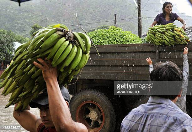 Natives unload bananas from a truck after the harvested them from a flooded plantation in Puerto Yumani 15 km from Rurrenabaque northeast Bolivia The...