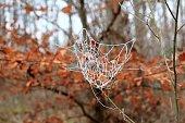 Spinnennetze  glänzen im Morgentau