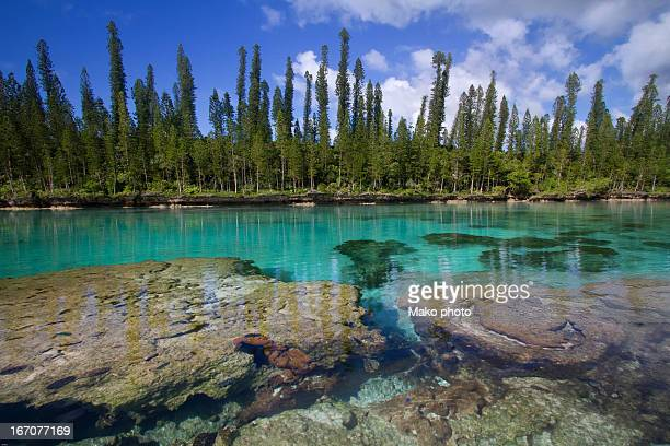 Natural aquarium New-caledonia.