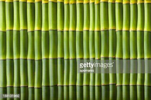 Natural bamboo seamless wall pattern